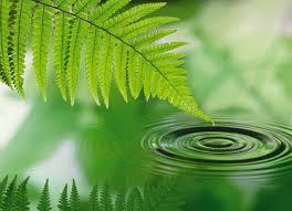 fern water