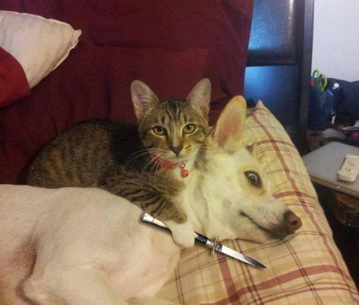 cat knife