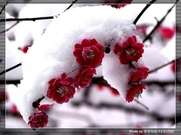 Flower With Snow 11