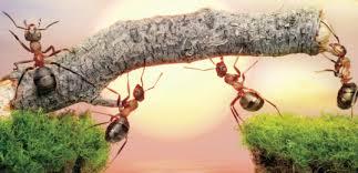 ants stick