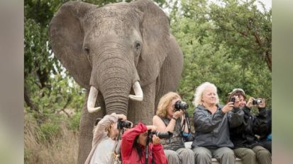 elephant photobomb