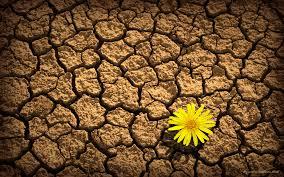 flower dirt