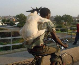 goat bike