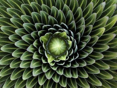 Perfect-Geometric-Patterns-In-Nature3__880