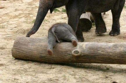 clumsy elephant
