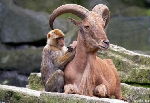 monkey antelope symbiosis