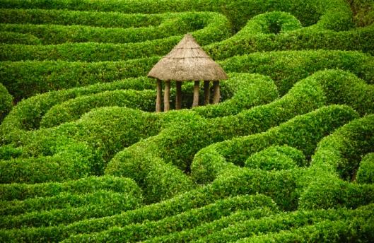 hedge maze mind