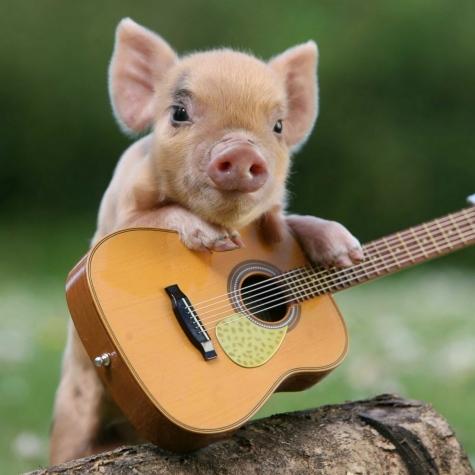pig guitar.jpg