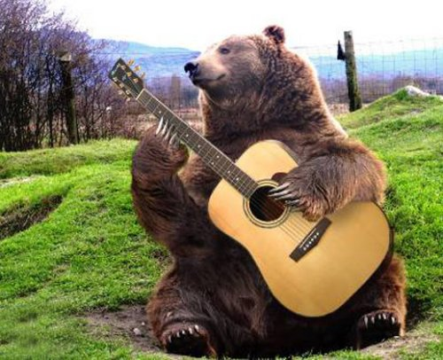 bearplayingguitar